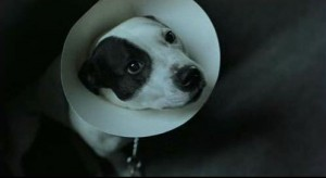 фильм snetch собачка